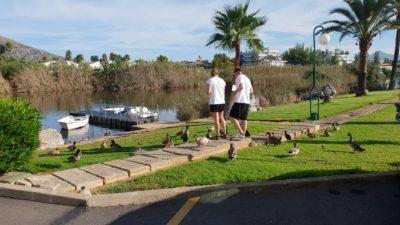 Kačeny u rybníčku před hotelem