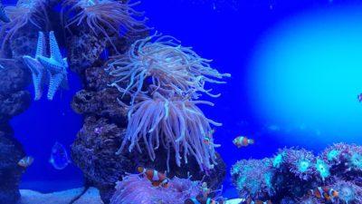 Sasanka a Nemo - Palma Aquarium