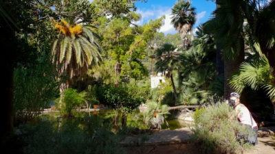 Jezírko - Jardins d'Alfabia