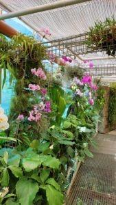 Skleník - Botanická zahrada a arboretum Mendelovy univerzity