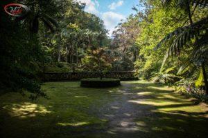 Furnas Terra Nostra garden 39