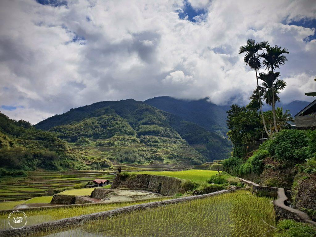 Rýžové terasy Hungduan