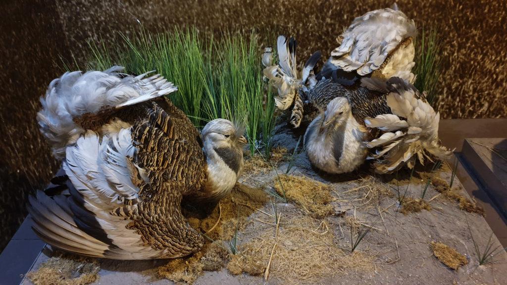 Fauna v muzeu Brno