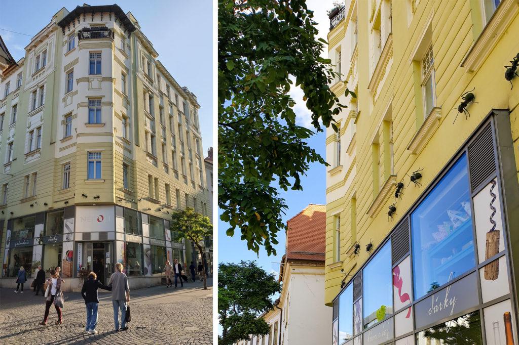 Mravenci - Brno
