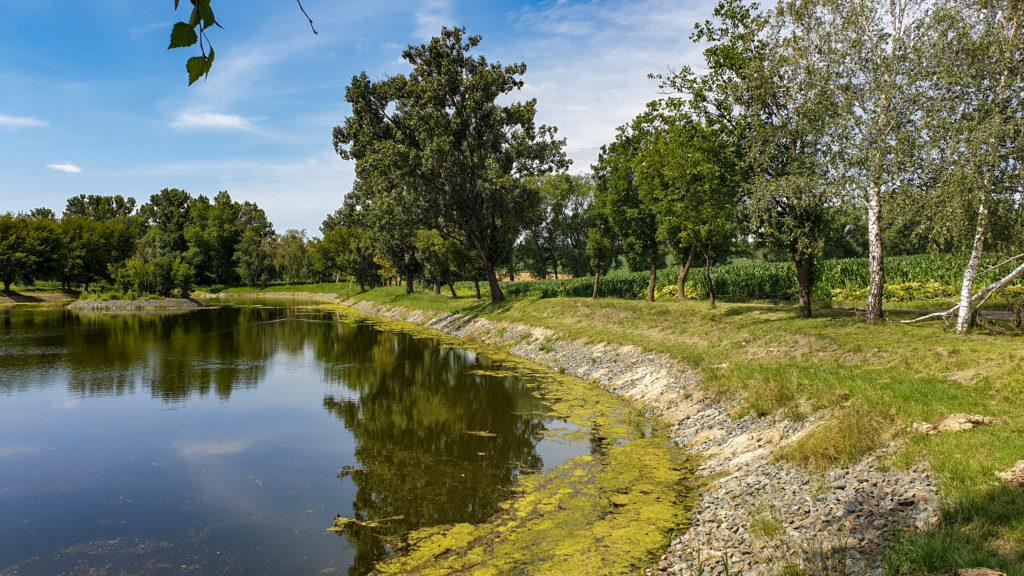 rybník Čejč